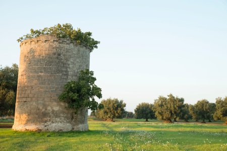An abandoned 'palummaru' (dovecote) outside Carosino, Taranto. Photo by Vincenzo Cuomo